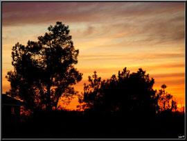 Coucher de soleil sur pins et cabane