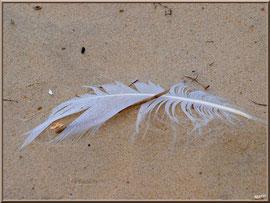 Plume sur le sable