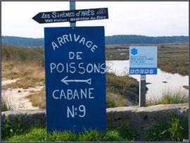 Pour acheter des huîtres et du poisson, suivez la flèche - Port d'Arès (Bassin d'Arcachon)
