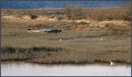 Chaland et mouettes dans les près-salés depuis le port d'Arès (Bassin d'Arcachon)