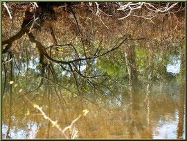 Reflets sur le Canal des Landes au Parc de la Chêneraie, en automne, Gujan-Mestras (Bassin d'Arcachon)