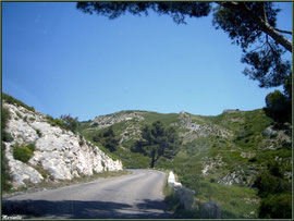 Route dans les Alpilles (Bouches du Rhône)