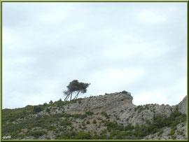 Les Alpilles sur les hauteurs du massif de La Caume dans les Alpilles (Bouches du Rhône)