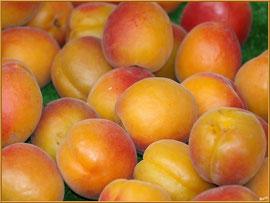 Marché de Provence, mardi matin à Vaison-la-Romaine, Haut Vaucluse (84), étal d'abricots