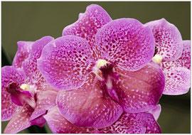 Orchidée - Michel