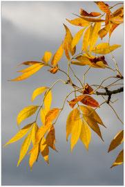 Jaune d'automne  - Pascale