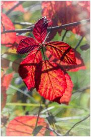 Rouge d'automne - Gilliane