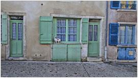Chat à Chaumont - Annie
