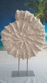 Nr. 8/ H57 x B40  Ammonit Nautilus CH 250