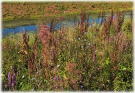 Die bunte Welt der Wildblumen