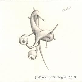 Téméraire extraversion, Florence AZAMBOURG CHALVIGNAC 2013 Tous droits réservés