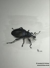 Rüsselkäfer - Tuschezeichnung 25x21 cm
