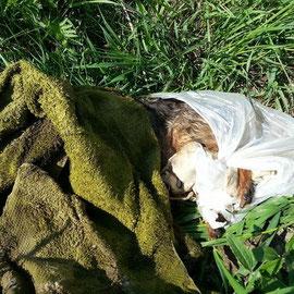 Auf einem Feld in Ostdorf (Berliner Süden/Brandenburg) Halter wurde ermittelt