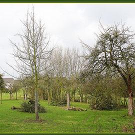 Fäll- und Rodungsmaßnahmen abgestorbener Obstbaume, NSG Friemersheimer Rheinaue, Datum: 27.01.2018