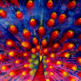 Pavone rosso - Tecnica mista su carta - 35x50