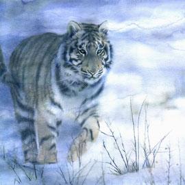 Tigre nella neve - Tecnica mista su carta - 30x40