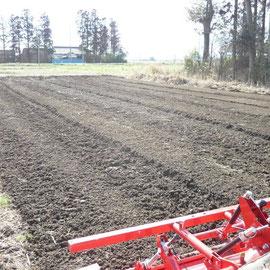 耕してEMを散布した畑