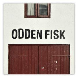 Odden Fisk 001
