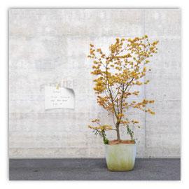 StadtSicht 140b: Baum im Blumentopf, Hunziger Areal