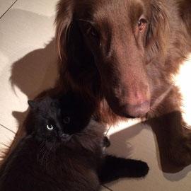 """Sunny feiert mit """"seiner"""" Katze"""