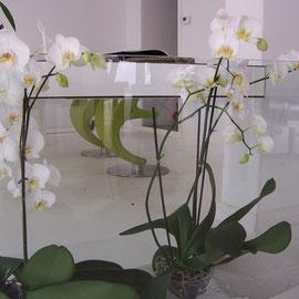 Designer Schreibtisch mit Glaspflanzengefäß