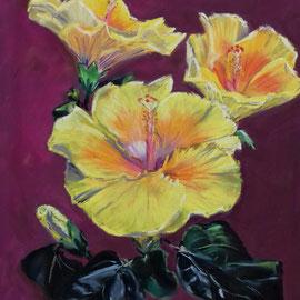 Hibiscus  30 x 40 Pastell