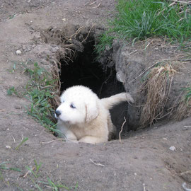 Eine von Chouchous Höhlen wurde inspiziert.