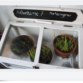 kleines Treibhaus für die Gräser