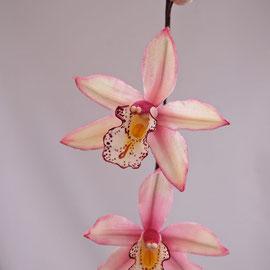 Орхидея Симбидиум
