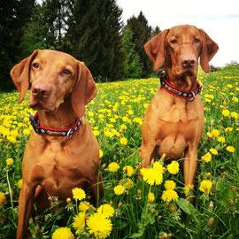 lüti - Halsbänder und Leinen für Hunde made in Appenzellerland