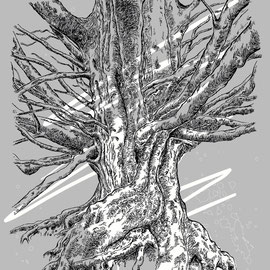 """""""Old Mother Beech"""""""