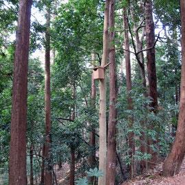広葉樹の大木ー3