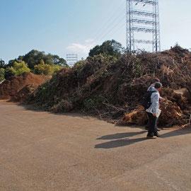 山積みの搬入された剪定枝