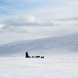 Huskygespann unterwegs durch`s Gebirge