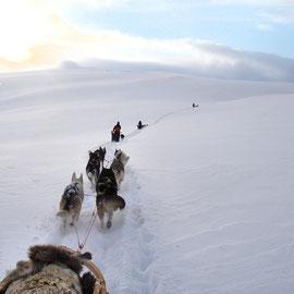 Hundeschlittentouren in Lapplands Gebirge