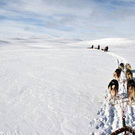 Traumwetter im Gebirge auf dem Hundeschlitten