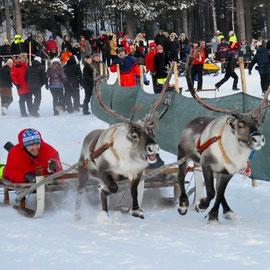 renrace på isen - Rentierrennen