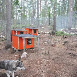geräumige Zwingeranlage für 6 Siberian huskys