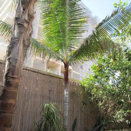 Palmier exotique