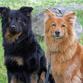 Gelbbacke und Fuchs