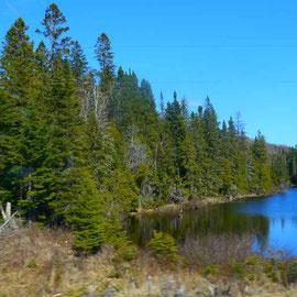 Wälder und Seen...