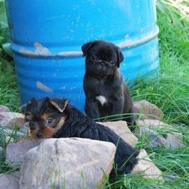 Мася и Кнопка в деревне
