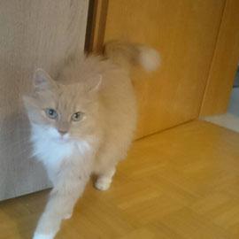 Katzenbetreuung in Lehrensteinsfeld