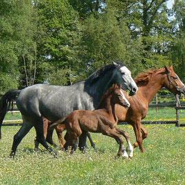 Pferdemamas unter sich