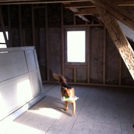 PET-Entsorgung-Unsere Hunde halten besser Ordnung als manch Fussgänger im Dorf!