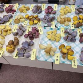 6種類のジャガイモをそれぞれ蒸かして試食
