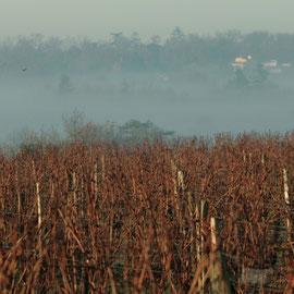 Brume matinale, vallée de la Pimpine, sur le vignoble du Château le Garde, Cénac