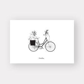 cado vélo