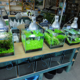 熱帯魚販売水槽