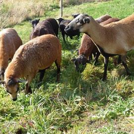 Der Umtrieb auf frische Weiden kann die Zahl der befruchtungsfähigen Eizellen erhöhen!